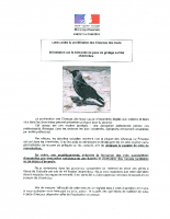 information choucas
